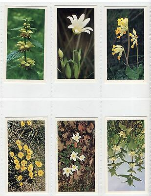 John Player (Doncella) Britain's Wild Flowers 1986 (Complete Set Of 30 Cards)