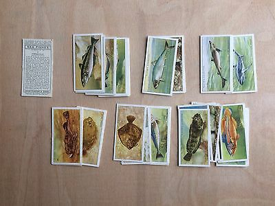 John Player & Sons Sea-Fishes 1935 Home Issue (Full Set Of 50 Cards)