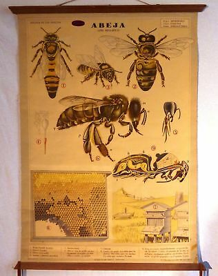 VINTAGE ROLL SCHOOL ANIMALS - THE BEE - ANTIQUE POSTER 100x74Cm Cartel Abeja