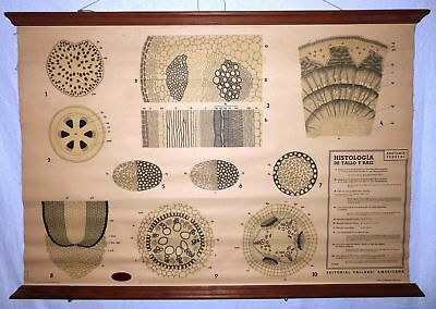 VINTAGE ROLL SCHOOL - SIZE AND ROOT - ANTIQUE POSTER 102x71Cm Cartel Botany