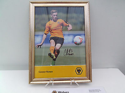 Signed Wolves Framed Picture Of Connor Ronan With Letter Of Authenticity