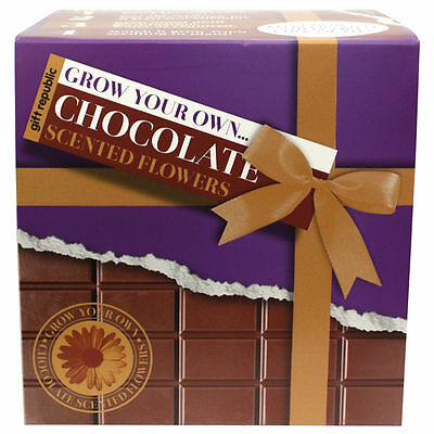 Grow Your Own Chocolate Flowers - Chocolate Smelling Flowers - Gift