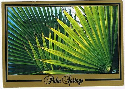 Palm Springs - California - Palm Fronds - Postcard # As-20