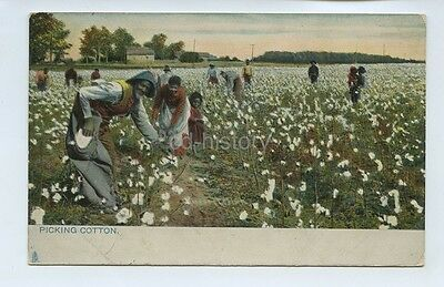 Black Workers Picking Cotton On A Plantation Southern USA - Postcard Tuck 1907