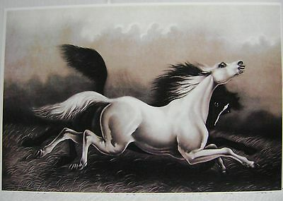 NEW Reproduction Vintage Print Art Wild Horses Arabian Black White Horse Pony