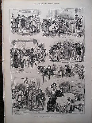 1879 Smithfield Club Cattle Show  Illustrated London News