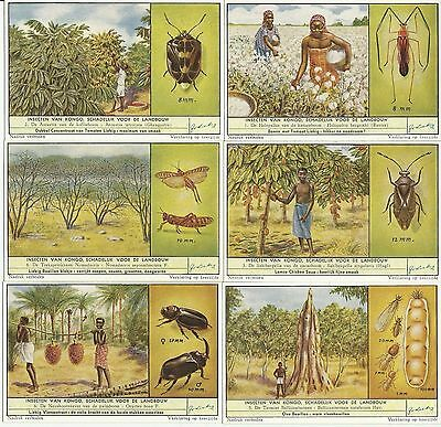 """1957 Set Of 6 Liebig Cards F1667  S1668 Congo """"insects Harmful To Argiculture"""""""