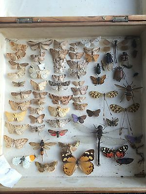 A Vintage Box Of Butterflies Moths Beetles And Insects