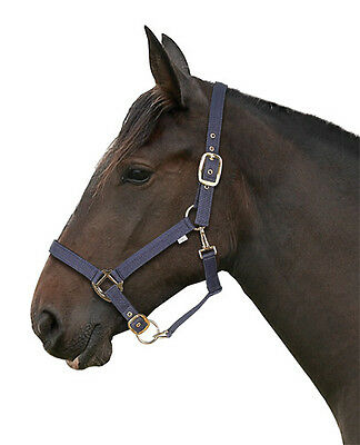 Padded Headcollar And Lead Rope Set