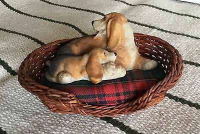 Basset Hound With Puppy In Basket