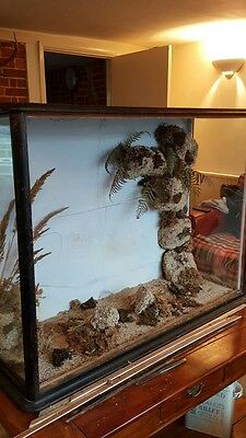 Large glass case for taxidermy antique 1900's