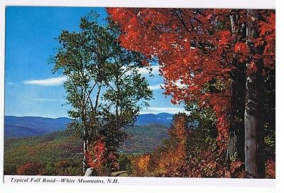 Typical Fall Road White Mountains New Hampshire - Postcard # C9002