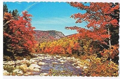 Kancamgus Wilderness Along The Swift River New Hampshire - Postcard # H-91