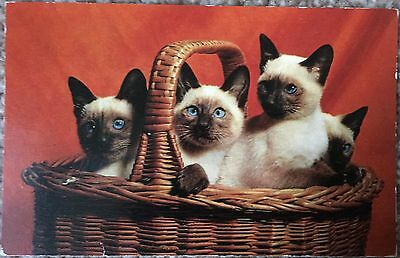 Old Postcard of 4 Siamese Kittens / Cats in a basket