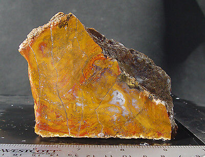 Gold and Red Moss Agate   Deming    Lapidary Rough      994