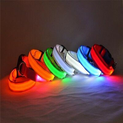 Collare LED Luminoso in Nylon per Cane Cani Sicurezza Notturna - 7 Colores