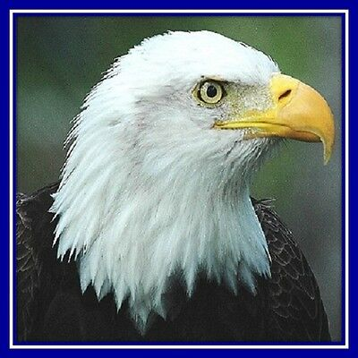 30 Custom Bald Eagle Personalized Address Labels