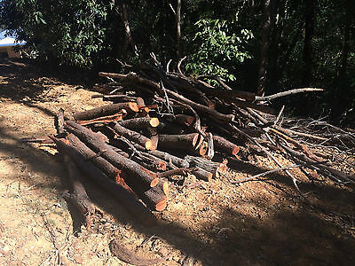 FIREWOOD, cut and load yourself and its FREE