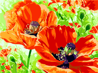 """16x20/"""" DIY Acrylic Paint By Number kit Oil Painting On Canvas Poppy Flowers 1584"""