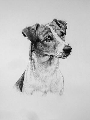 Jack Russell Terrier dog drawing dog art Limited Edition art print H Irvine