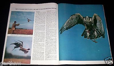 Falconry 1964 Falcon Hunting & Training Pictorial * Robert B Perry & Lou Woyce