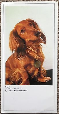 Postcard of Dackel Dachshund Dog Collector's Postcard by Noel Tatt