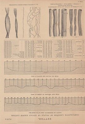 Cotton, Baumwolle, Comparative Lengths of staple of Indian grown cotton, Druckgr