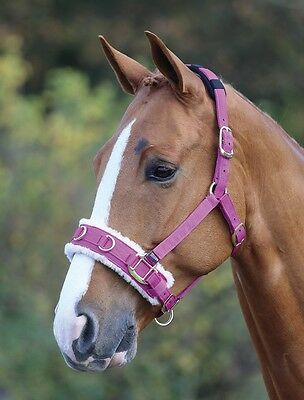 Shires Fleece Lined Lunge Cavesson Raspberry Full