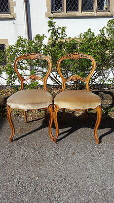 A Beautiful Pair of Antique Victorian Mahogany Orante Salon Chairs Great Shape