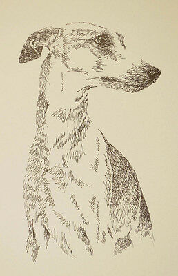 Whippet dog art portrait drawing. Print 88 Kline adds dog's name FREE Great Gift