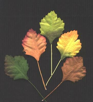 50 Scrapbooking Paper Leaves 30mm MPL6X Autumn Colours Craft embellishments