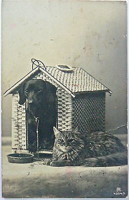 Postcard.dogs.guard Cat!.older Card