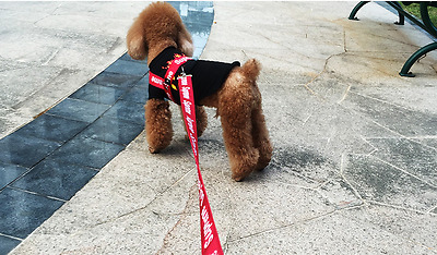2017 HOT Supreme Pet Dog Cat Walking Collar Chest Strap Harness Traction Leash *