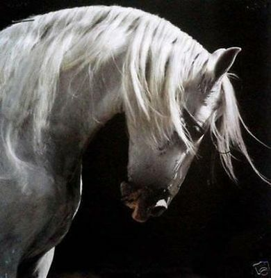 "High Quality Hand Painted Animal Oil Painting On Canvas : ""horse"""