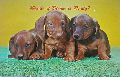 Postcard.dogs.dachshund.'wonder If Dinner Is Ready?'printed In The U.s.a.