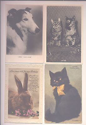 Lot Of 15 Old Postcards Of Animals Cats, Birds , Dogs, Including Lassie