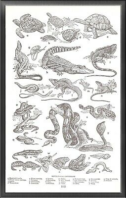 Reptiles and Amphibians Unaltered Art Print Upcycled Vintage Dictionary Page