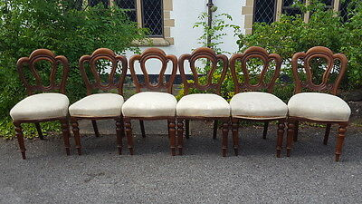 Beautiful Set of 6 Victorian Mahogany Admiralty/Balloon Back Dining Chairs C1880