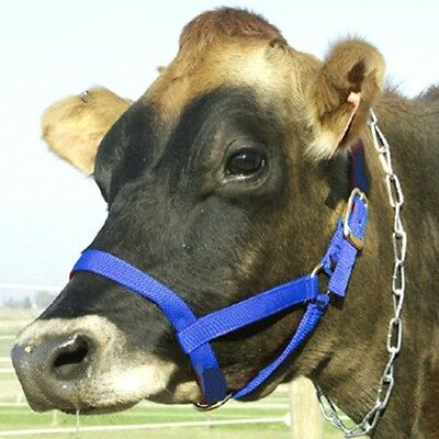 Intrepid International NEW Cow Nylon Web Halter - Cow Blue