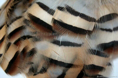 # 228 Black /& White Reeves Pheasant and Guinea Hen Feather Pad     US Seller