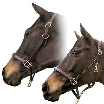 "Intrepid International NEW Classic Grooming Combination Leather Halter 3/4"" Wide"