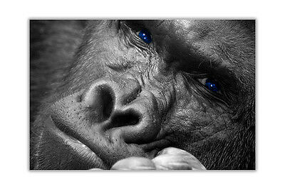 A2Silverback Gorilla Forest Animal Size A2 Poster Print Photo Art Gift #3014