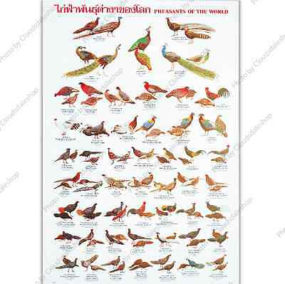 Poster Of Pheasants Species Around The World Watercolor Illustration Collector