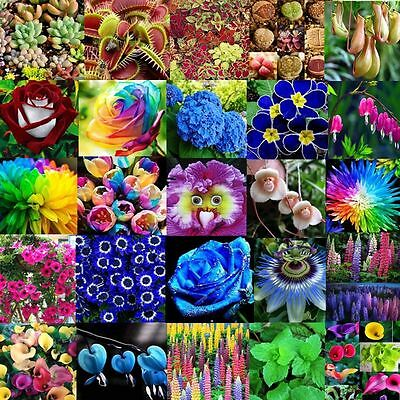 Various Flower Seed Ideal Garden Potted Seeds Rare Flower Plant Ornamental Decor