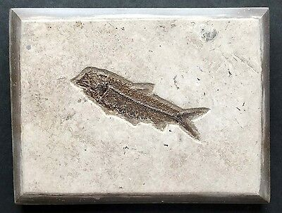 Unidentified, Highly Detailed Fossil Fish Plate