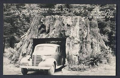 Drive thru - Drive-Way Stump - 1941 vintage car - Pepperwood real photo postcard