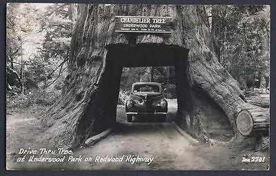 Drive Thru Tree Underwood Park Redwood Ca Vintage car 1940? real photo postcard