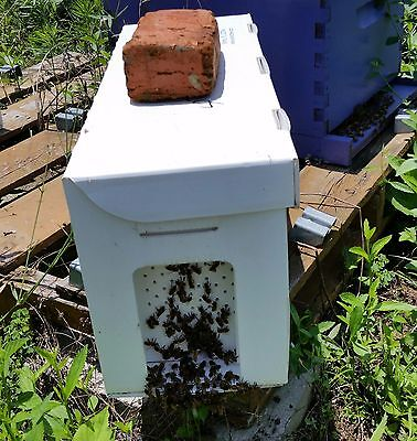Bee nucs. Italian Honey Bees. DEPOSIT ONLY