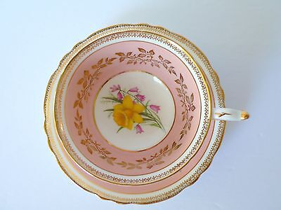 Paragon Pink Yellow Daffodils Bone China Cup & Saucer Set