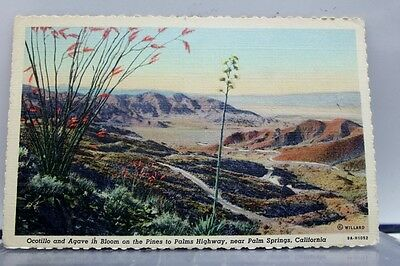 California CA Palm Springs Highway Ocotillo Agave Postcard Old Vintage Card View
